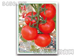 番茄种子-福星HybridF1-现代金穗
