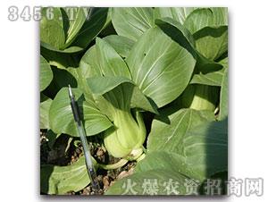 小青菜种子-华光-方圆种业