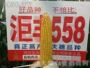 ��丰558-玉米种子