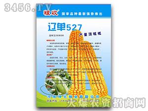 玉米种子-辽单527-粮收-坤元种业