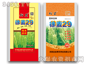 徐麦29-小麦种子-金博农