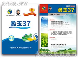 蠡玉37-玉米种子-鲲玉种业