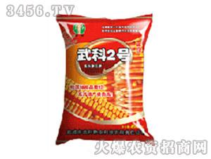 武科2号-玉米种子-士惠