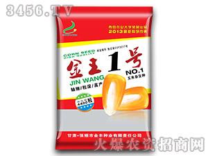 金王一号-玉米种子-金丰种业