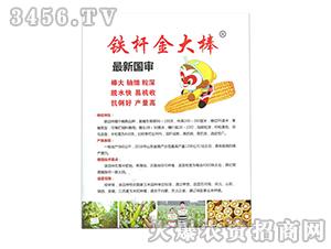 铁杆金大棒玉米种子-孟都种业