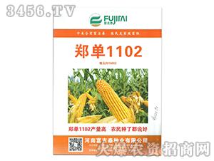 郑单1102玉米种-富吉泰种业