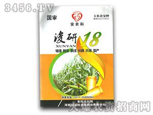 浚研18-玉米种子-安禾新