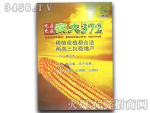 农大372-玉米种子-九鼎九盛