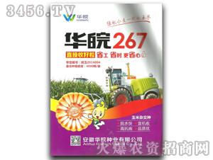 华皖267玉米种子-华皖种业