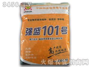 强盛101(袋装)-玉米种子-鑫博农业