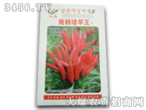 南韩矮旱王-辣椒种子-鸿瑞农业