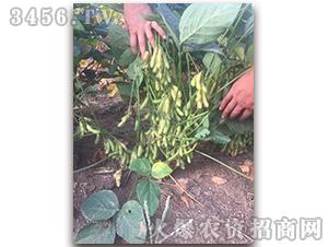 邯豆8号-大豆种子