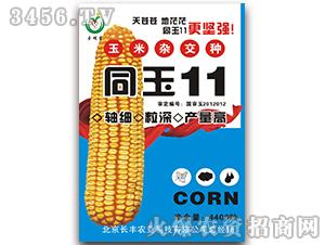 同玉11-玉米种子