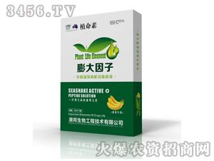 香蕉专用海蛇活肽原液-植命素-澳邦