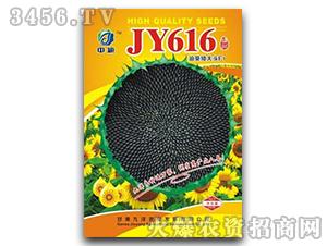 油葵矮大头F1-葵花种子-JY616