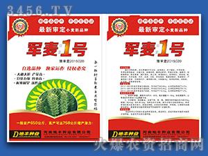 军麦1号-小麦种子-地
