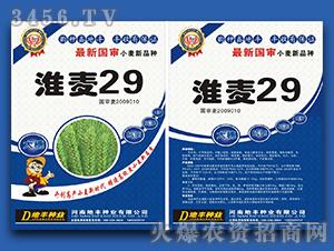 淮麦29号-小麦种子-