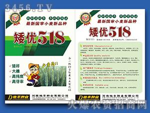 矮优518-小麦种子-
