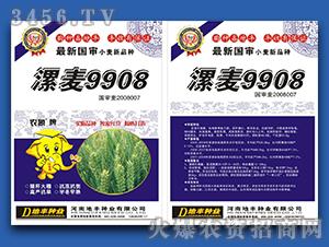 漯麦9908-小麦种子