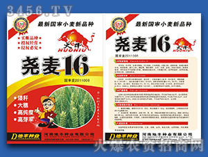 尧麦16-小麦种子-地丰种业