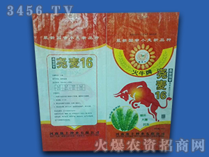 尧麦16(袋装)-小麦