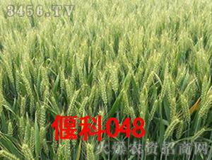 偃科048-小麦种子-商都种业