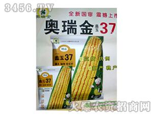 玉米种子-蠡玉37-奥瑞金-新兴发