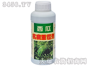 抗病重茬剂西瓜专用-农