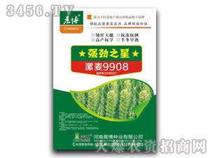 小麦种子-漯麦9908-晨博种业