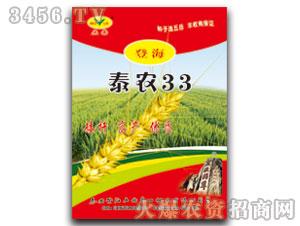 小麦种子-泰农33-五岳泰山