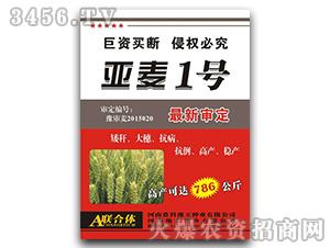 亚麦1号-小麦种子-鑫奥科种子-农科豫玉