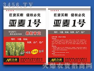 亚麦1号-小麦种子-地