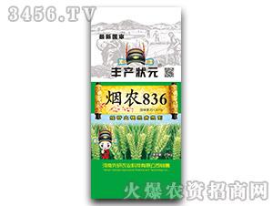 烟农836-小麦种子-丰产状元