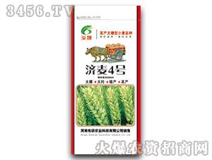 济麦4号-小麦种子-先研农业