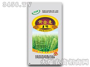 黄金麦1号-小麦种子-丰产状元