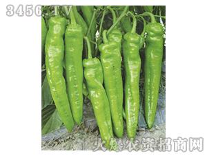 辣椒种子-常胜1号-农