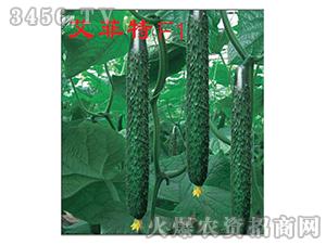 早春、秋延黄瓜种子-艾