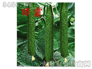 早春黄瓜种子-绿霸-农