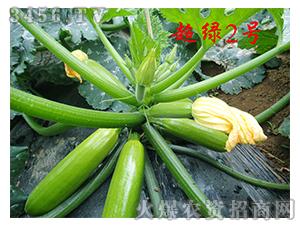 越夏西葫芦种子-超绿2