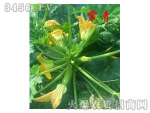 抗病毒西葫芦种子-常青