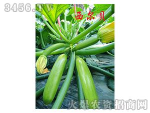 越冬、早春西葫芦种子-