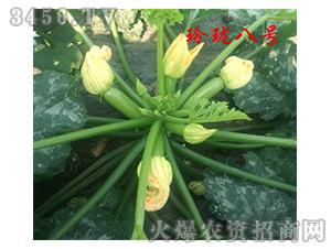 耐高温西葫芦种子-玲珑