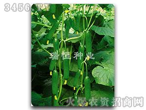 黄瓜种子-11-12-瑞恒种业