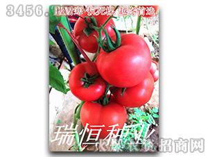 西红柿种子-瑞恒118-瑞恒种业