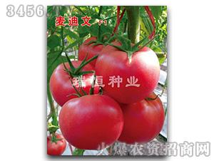 西红柿种子-麦迪文-瑞恒种业