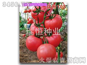 西红柿种子-瑞粉102-瑞恒种业