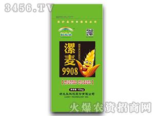 漯麦9908-小麦种子-好兆头