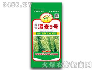 国审漯麦9号-小麦种子-明宏种业