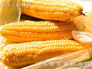 瑞丰1号-玉米种子-好兆头