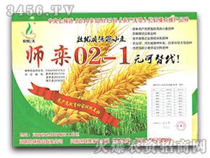 师栾02-1-小麦种子-地瑞种业